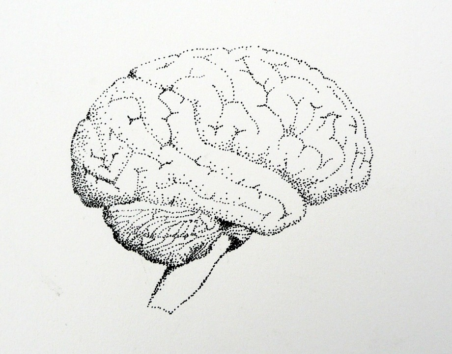 brain in pen and ink